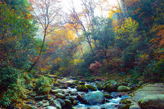 Autumn stream in forest. Stock Photography