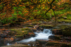 Autumn stream forest Stock Images