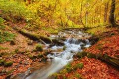 autumn stream in the forest, gold autumn European landscape Stock Photos