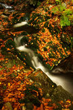 Autumn stream in Giant mountains. One of the awesome autumn streams in Giant mountains royalty free stock photo