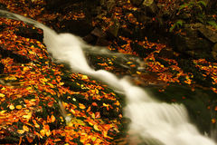 Autumn stream in Giant mountains. One of many streams in Giant mountains decorated by autumn foliage royalty free stock photos