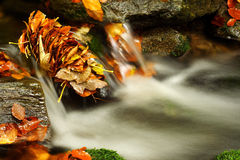 Autumn stream in Giant mountains. One of many streams in Giant mountains decorated by autumn foliage stock image