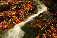 Autumn stream in Giant mountains. One of many streams in Giant mountains decorated by autumn foliage stock photo
