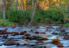 Autumn Stream HDR Stock Photo