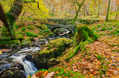 Autumn Stream. Autumn landscape of a stream in Thirlmere, Cumbria Royalty Free Stock Photo