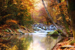 Autumn Stream lined with trees Royalty Free Stock Photos