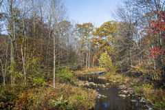 Autumn Stream Royalty Free Stock Photography