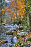 Autumn Stream with mossy rocks stock photo