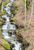 Autumn stream. A small stream in an autumn forest in the Tuscan countryside Royalty Free Stock Photo