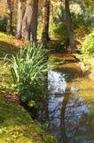 Autumn stream. Royalty Free Stock Photography