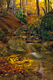 Autumn stream in wood Royalty Free Stock Photos