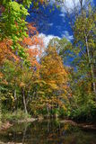 Autumn by a Stream in the Woods. Reflections in a stream during  the Autumn season Royalty Free Stock Photography