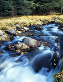 Autumn stream in Xinjiang Royalty Free Stock Photos
