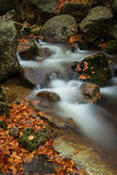 Autumn streams. Autumn brook with stones and colored leaves Royalty Free Stock Photo