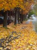 Autumn street. Beautiful maple trees in autumn Stock Images