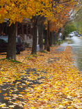 Autumn street Stock Images
