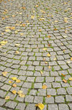 Autumn street. Grey stones on the street with autumn leaves as background image Royalty Free Stock Images