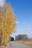 Autumn street Royalty Free Stock Image