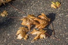 Autumn on the street Royalty Free Stock Photo
