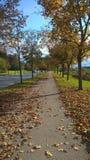 Autumn on the street. Leaves carpet on the street Stock Photos