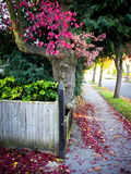 Autumn street Royalty Free Stock Photo