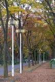 Autumn street Stock Image