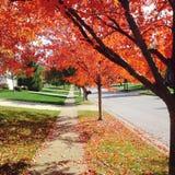 Autumn street Royalty Free Stock Photos
