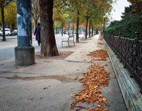 Autumn street in Vienna Royalty Free Stock Photos