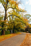 Autumn street view. Autumn scenery where we can see a suburban street where the trees are turning into different colours.  The side of the street is textured Royalty Free Stock Image