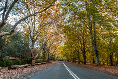 Autumn street view. Autumn scenery where we can see a suburban street where the trees are turning into different colours.  The side of the street is textured Royalty Free Stock Photo