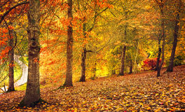 Autumn Stroll Royaltyfria Bilder