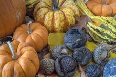 Autumn studio scene of autumn Royalty Free Stock Photography