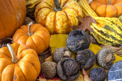Autumn studio scene of autumn Royalty Free Stock Photo
