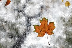 Autumn Study Stock Photo