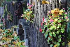 Autumn stump with flowers Stock Photography