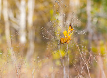 Autumn style background Royalty Free Stock Photo