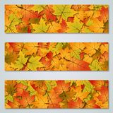 Autumn style banners vector collection. Autumn colorful leaves banners design vector templates collection vector illustration