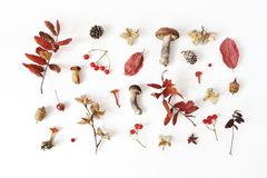 Autumn styled botanical arrangement. Composition of mushrooms, acorns, pine cones, beechnuts, colorful dried leaves. Little apples and rowan berreis on white stock photos