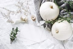 Autumn styled photo. Feminine wedding desktop stationery mockup scene with blank greeting card, eucalyptus, ribbons. White pumpkins and gypsophila flowers royalty free stock photo