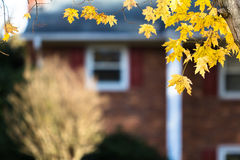 Autumn in Suburbia. Autumn background in suburban setting Stock Photography