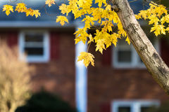 Autumn in Suburbia. Autumn background in suburban setting Stock Photo