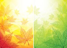 Autumn and summer backgrounds Royalty Free Stock Photo