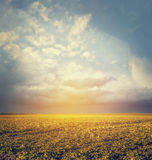 Autumn or summer field landscape with amazing sky,blurred nature background royalty free stock photos