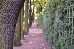 Autumn Summer Garden Of St Petersburg Stockfoto