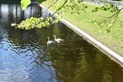 Autumn Summer Garden Of St Petersburg Stock Fotografie