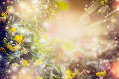 Autumn or summer nature background with flowers, sun rays and bokeh. Royalty Free Stock Photos