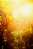 Autumn or summer nature background with grass, flowers and sunset light Stock Photography
