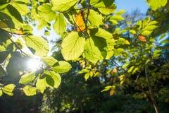 Autumn Sun Lizenzfreie Stockfotografie