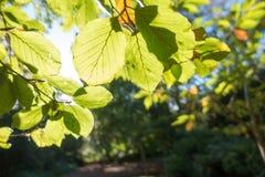 Autumn Sun Lizenzfreie Stockbilder