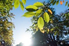 Autumn Sun Lizenzfreies Stockbild